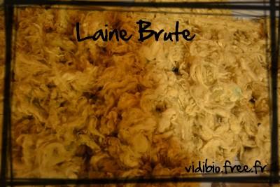 laine.brute